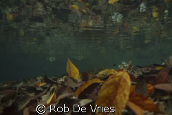 Rainforest above, corals, leaves and fish just under the ... by Rob De Vries 
